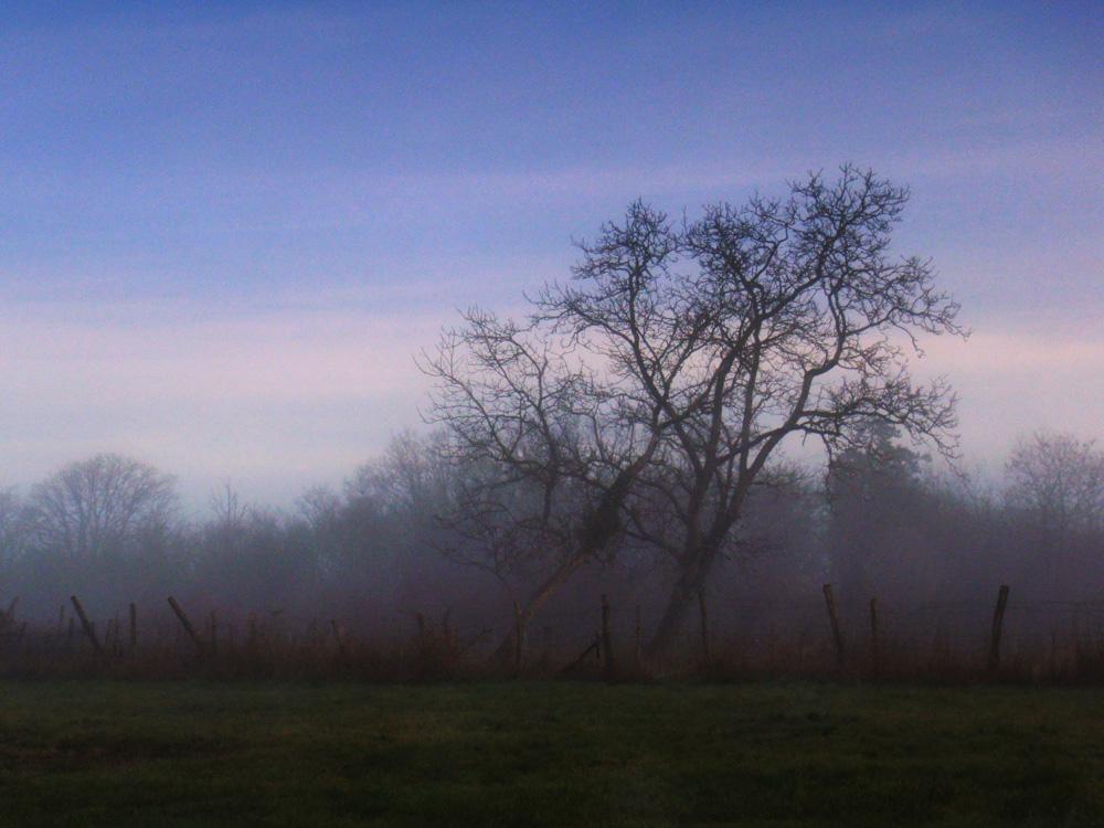 Petit matin, charente - 2010