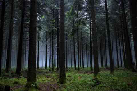 forêt des Vaseix, Limousin